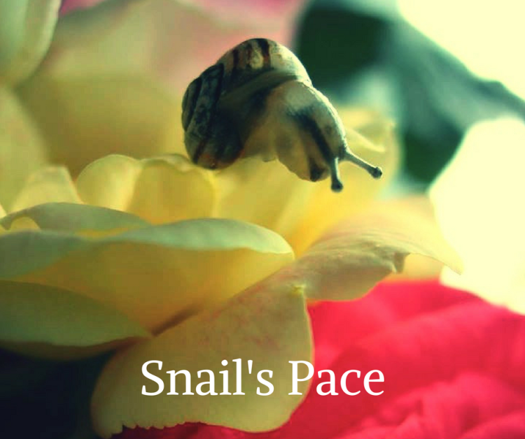 Snail's Pace by John Christopher.png
